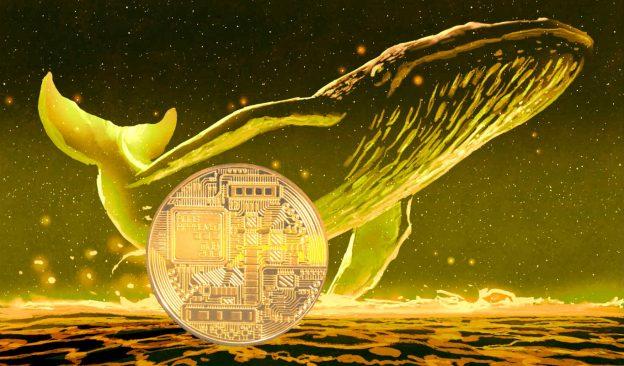 Paus Crypto Dengan Diam-diam Mengumpulkan Tiga Altcoin Ini, Menurut Firma Analytics Santiment